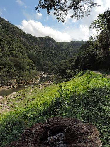 San Ignacio - Fungus World