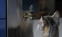 The Kitchen Explorer (AnyMotion) Tags: nelli kitchen küche oven backofen door tür mirrored gespiegelt spiegelung portrait porträt porträtaufnahmen pet cat cats katze katzen animals tiere 2016 anymotion tabby getigert atigrada félin chat gata 6d canoneos6d