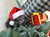 Christmas greetings 2016 with Baloo the Maine coon (romeosilverpersian) Tags: christmas xmas pets cats kitten kitty kittens mainecoon mainecooncat mainecoons santaclauscats