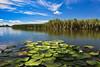 Delta du Danube (Voyages Lambert) Tags: delta water romania danuberiver nature river lake wildlifereserve beautyinnature blue sky landscape scenics reflection summer horizonoverwater outdoors