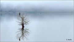 Heron in a Tree on a Foggy Day (Suzanham) Tags: fog foggy lake mississippi noxubeewildliferefuge heron wildlife nature waterscape landscape bird tree