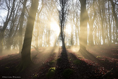 Give me the light ! (Hector Prada) Tags: bosque niebla otoño sol hayedo musgo luz mágico encantado atmosfera magia forest fog sun light autumn naturaleza paisaje nature landscape magic mist happy new year año nuevo sunrays sunbeams frozen morning evening brown shadows sunlight woods