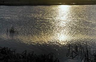 Die Treene in der Abendsonne; Wohlde, Stapelholm (3)