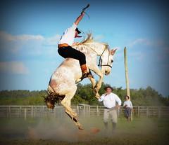 Fernando Guimarães (Eduardo Amorim) Tags: gaúcho gaúchos gaucho gauchos cavalos caballos horses chevaux cavalli pferde caballo horse cheval cavallo pferd crioulo criollo crioulos criollos cavalocrioulo cavaloscrioulos caballocriollo caballoscriollos pampa campanha fronteira bagé riograndedosul brésil brasil sudamérica südamerika suramérica américadosul southamerica amériquedusud americameridionale américadelsur americadelsud cavalo 馬 حصان 马 лошадь ঘোড়া 말 סוס ม้า häst hest hevonen άλογο brazil eduardoamorim gineteada jineteada
