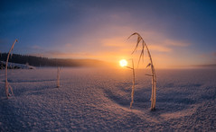 Lights on (Kari Siren) Tags: light winter sun sunrise frost reed color lake snow karijärvi jaala finland samyang 8mm fisheye brilliant