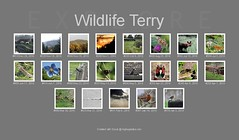 2016 Explored. (Wildlife Terry) Tags: fdsflickrtoys bighugelabs flickr explore wildlife nature birds countryside cumbria lakedistrict trentmerseycanal weather scenery landscapes cheshire