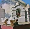 "NEPAL, near Stupa von Swayambhunath, 15106/7785 (roba66) Tags: reisen travel explore voyages urlaub visit roba66 nepal asien südasien asia city stadt capitol kathmandubefore earthquake ""stupa von swayambhunath"" stupa swayambhunath tempel tempelanlage building architektur architecture arquitetura kulturdenkmal monument bau fassade façade platz places historie history historic historical geschichte urban eastasia temple buddhismus earthasia hinduism hinduismus monkeys ape affen"