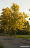 On my way to work. (rumimume) Tags: potd rumimume 2016 niagara ontario canada photo canon 80d sigma nature plant fall autumn tree golden road morning sun