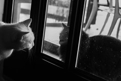 Day 139 (inbar_stern) Tags: cats cat door outside inside black white blackandwhite blackwhite love friends 365 365daysproject 365dayschallenge 365challenge 365project 365days project365