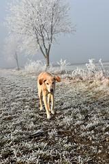 Neujahr 2017 (Pixelkids) Tags: landschaft winterlandschaft bäume europa deutschland rauhreif winter bayern anton hund