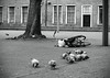 © Inge Hoogendoorn (ingehoogendoorn) Tags: duif duiven pigeons pigeon vogel vogels bird birds blackandwhite blacknwhite zwartwit hofplaats denhaag thehague bike bikes bicycle bicycles monochrome monochroom dutchbikes dutchbike fiets fietsen fietstas shallowdepthoffield depthoffield