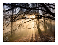 Winter Woodland (Chris Jones www.chrisjonesphotographer.uk) Tags: dorset woods woodland mist fog sun ray rays tree branch branches twigs leaf leaves warmth light chris jones photographer wwwchrisjonesphotographeruk