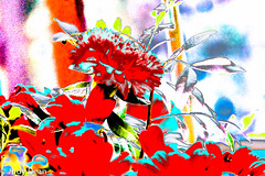 Such fun!! (judy dean) Tags: bouquet flowers red carnation leaves sliding lr nik fun abstract colours