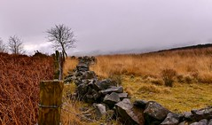 Wall down fence up (Englepip) Tags: lancashire bracken grass tree landscape fence wall outdoor mist weather countryside forestofbowland sky hill