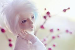 Calm (Shimiro Kestrel) Tags: bjd mai doll withdoll bjdphotography bjdportrait bjdcustom msd dollphotography balljointeddoll cute custom abjd portrait whitehair blueeyes