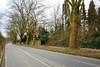 DSC_8635_01 (armin.54) Tags: platanen strasenbäume