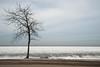 DSC_2857 (Eric Hartke) Tags: aop beach keswick outdoors photoassignments tree winter nikond700 nature 1735mmf28d