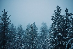 Haze (Louisa Banegas Rogerson) Tags: snow trees forest
