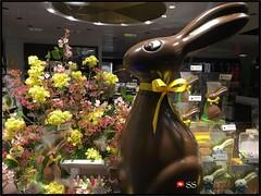 Easter Chocolate in Zurich Switzerland (Shobana Shanthakumar) Tags: chocolate switzerland swisschocolate easter sweet yummy delicious schweiz suisse zurich zürich