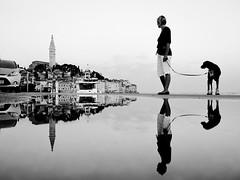 Blick zurück (flori schilcher) Tags: kroatien rovinje spiegelung hund dog
