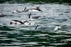 British Columbia Luxury Fishing & Eco Touring 58
