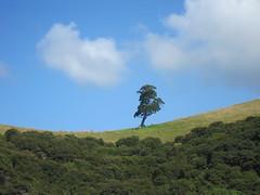 Lonely Tree - Bay of Islands - New Zealand (north) (thobern1) Tags: trees newzealand north arbres bayofislands bäume neuseeland nordinsel