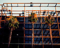 Three Palms (Evan Tchelepi) Tags: california city sunset orange color building film analog palms golden fuji grain sanjose hour frame pro medium format treets 400h mamiya7