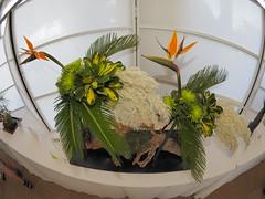 Bird of Paradise, Spider Mums, Sago, Tall Grass, Trachelium, Pine & Dwarf Brassaia Cluster by Susan Kelley of the Koryu School (nano.maus) Tags: fisheye lauritzengardens japaneseflowerarrangement omahabotanicalsociety japaneseambiencefestival