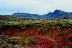 Vi Barmaskar, Klfstindar (oeiriks) Tags: autumn mountain landscape lava iceland moss highland klfstindar oeiriks sonyalpha350