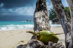 Coco (NICOLAS POUSSIN PHOTOGRAPHIE) Tags: soleil eau sable bleu coco fin vague plage rocher palmier bois seychelle turquoide