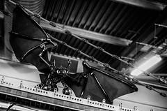 envol (alouest225) Tags: sony rx100m3 bordeaux lgo lego fansdebriques 2015 monochrome aquitaine gironde france dragons krokmou blackandwhite noiretblanc alouest225