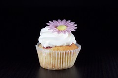 Flying Cupcake (annelaurem) Tags: cupcake daisy flash flower strob strobist