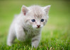 'Cookie' (Jonathan Casey) Tags: kitten cat chums catchums jonathancaseyphotography outdoor 105mm nikon f28 vr rescue