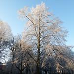 Frost 2016 thumbnail