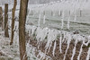 January 1. Garlands of ice hung on barbed wire (martine_vise) Tags: winter winteriscoming winterishere wintertime winterday whitewinter beautifulwinter frosted glace gel ice outside normandie orne france leperche fenced barbedwire country countrylife rurallife
