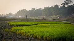 Life by the river bank (haqiqimeraat) Tags: padma riverbank river riverside bangladesh 50mmf18 prime nikon colour rural