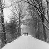 Snowy Tow Path (Dalliance with Light (Andy Farmer)) Tags: delawareandraritancanal xtol11 princeton hasselblad500c landscape trees towpath trix nj nature drcanal kingston forest woods film snow newjersey unitedstates us