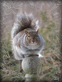 Squirrel looking in my window