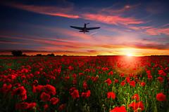 POP0016 (Smart Aviation Art) Tags: poppy poppies poppyfield poppyfields lancaster vulcan avro spitfire hurricane aircraft military bbmf