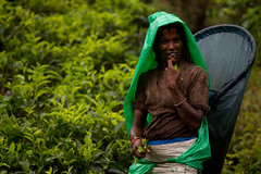 Tea Picker (alexbazar19) Tags: sri lanka srilanka portrait green tea tealeaves woman teapicker