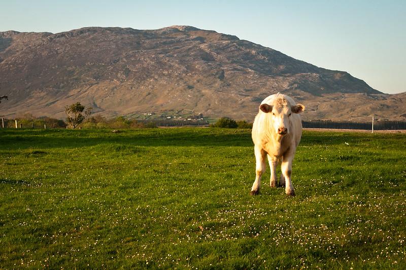 Irlandia, Connemara