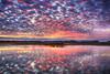 New Year (Kansas Poetry (Patrick)) Tags: sunset bakerwetlands wetlands color lawrencekansas kansas sony a6000 patrickemerson