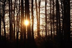 Setting sun (zinnia2012) Tags: settingsun zinnia2012 forêt sole soleilcouchant focusing life barebranches focusingonlife