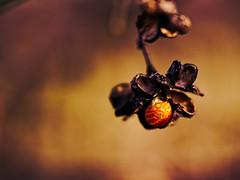 2017-01-28_13-48-23 (torstenbehrens) Tags: nature bokeh tarbek schleswigholstein deutschland panasonic dmcg1