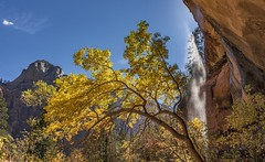 *Emerald Pools Trail @ Fall* (albert.wirtz) Tags: albertwirtz usa zion zionnp nationalpark zionnationalpark unitedstates vereinigtestaaten emeraldpoolstrail hiking wandern trail fall autumn herbst turningleaves laubfärbung waterfall wasserfall utah washingtoncounty felsüberhang alcove alkoven water leaves blätter bunteblätter laub