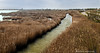 2261 Delta del Ebro, Tarragona (Ricard Gabarrús) Tags: agua delta arrozal natura rustico canal rio ricardgabarrus water deltadelebro olympus ricgaba camino