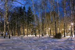 The shadows of the old park #3 (Unicorn.mod) Tags: 2017 january winter colors snow night evening lights lipetsk park cityscape shadows outdoor landsape canoneos6d samyang35mmf14asumc samyangmf35mmf14edasumcae