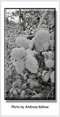 Andreas Kalbow Winter 2017 Halle Westfalen (18) (Vogelfoto69) Tags: halle westfalen gerry weber stadion orange gelb rot blau grün braun sonne laub wald bäume baum busch strauch andreas kalbow naturfoto naturfilm naturfilmer jahreszeit teutoburger nrw naturschutz naturfreund herbstlaub herbststurm bunt eisblumen eiskristalle nebel abendrot winter winterhimmel schnee schneeverwehung weis 2017