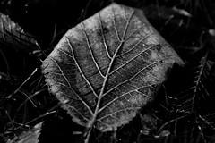 Vintage (Vivi Black) Tags: leath bw macro nature