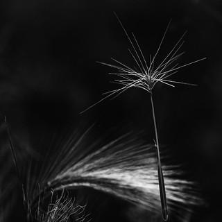 Grasslights